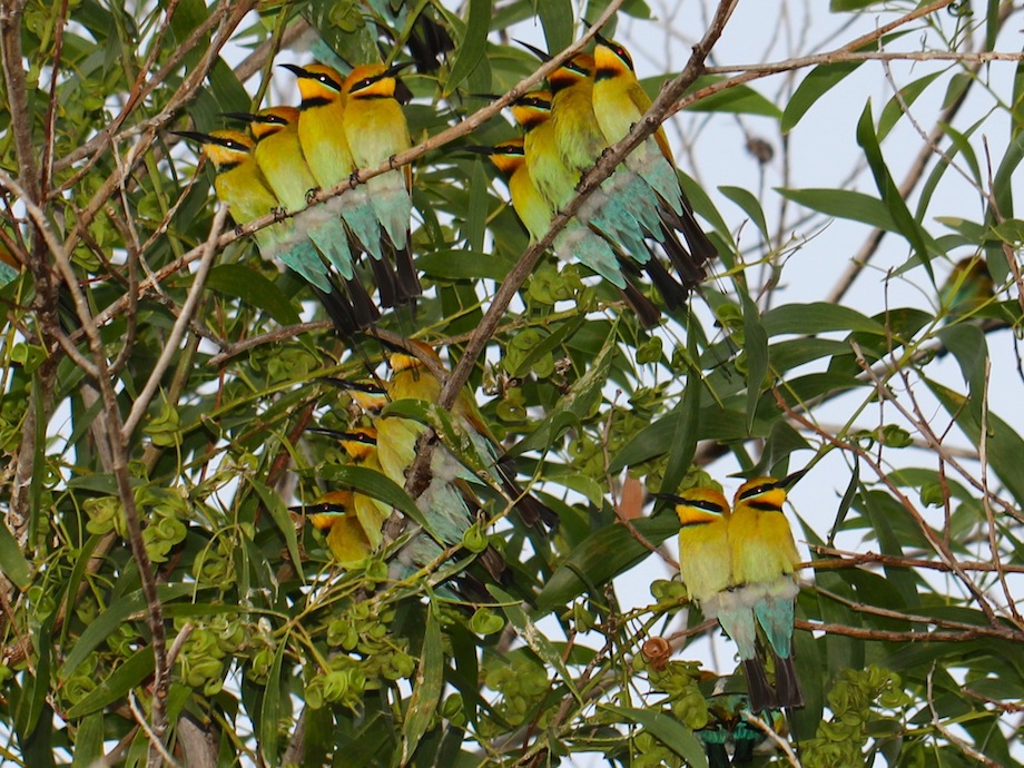 groups of birds perching together