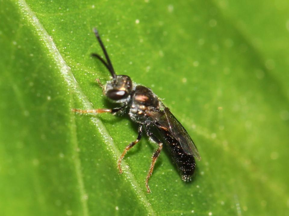 brown bee on leaf