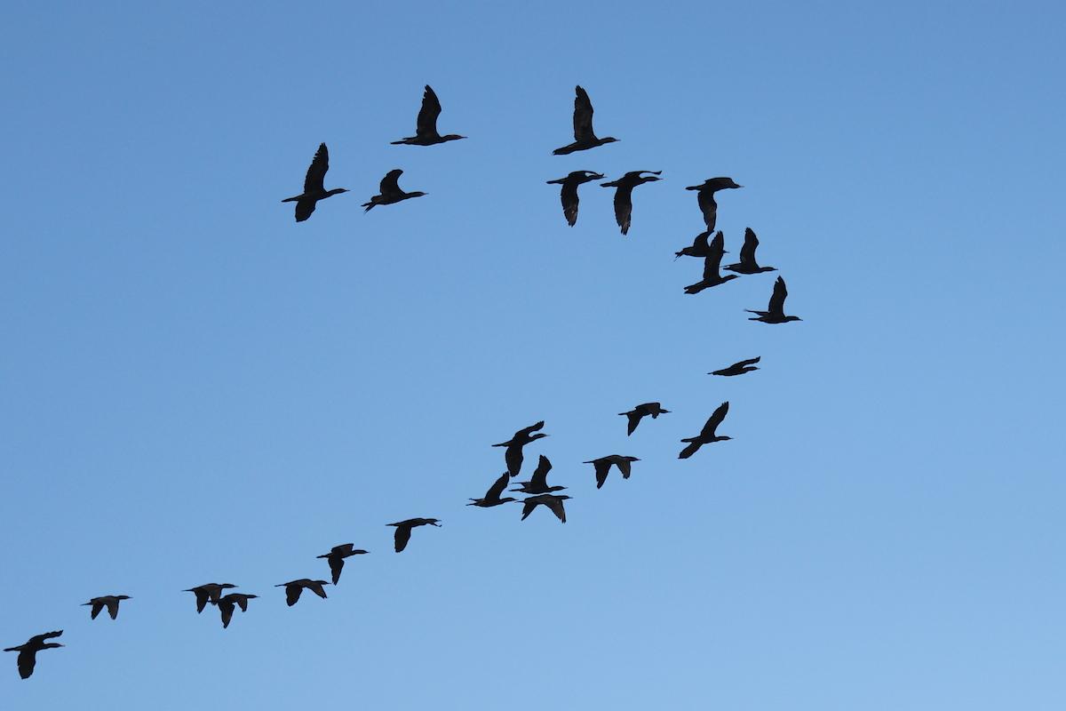 birds against the sky