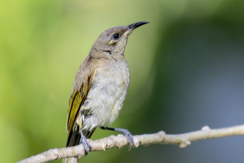 small brown bird perching on twig