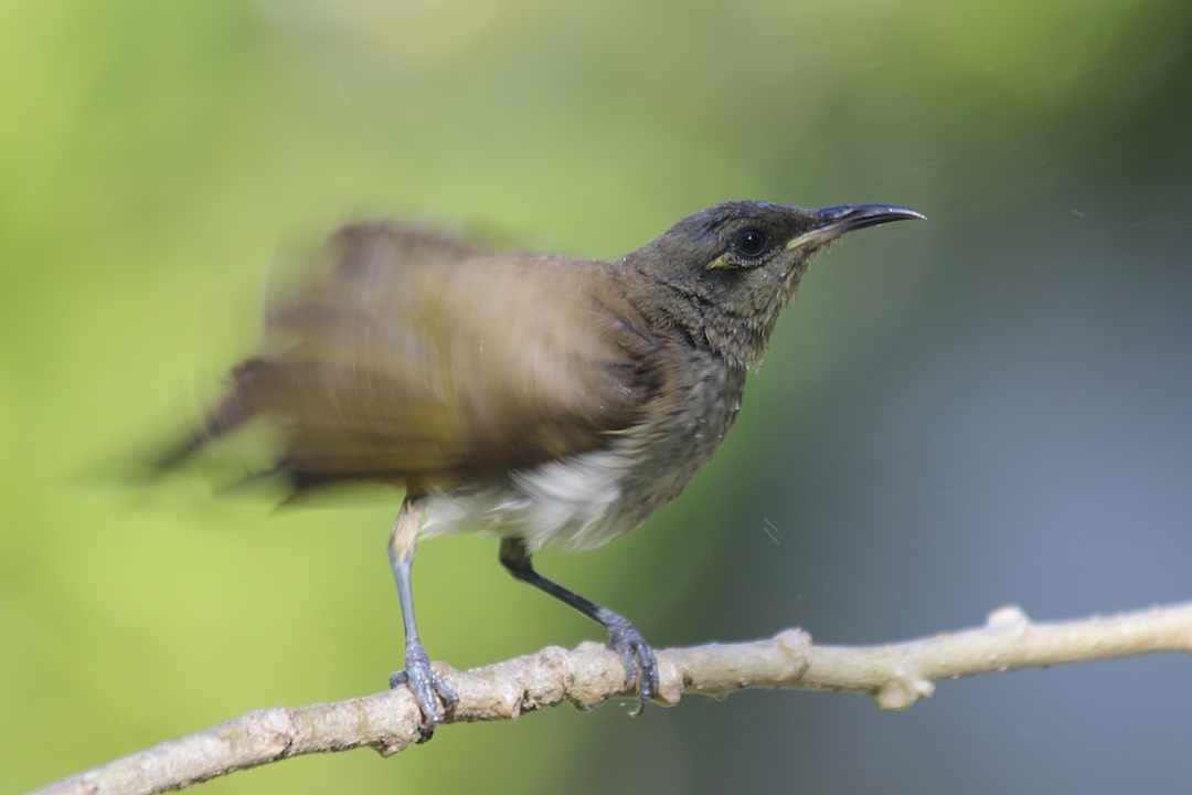 brown bird flapping wings