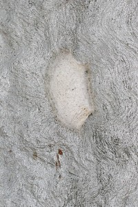 white silk covering hollow in treetrunk