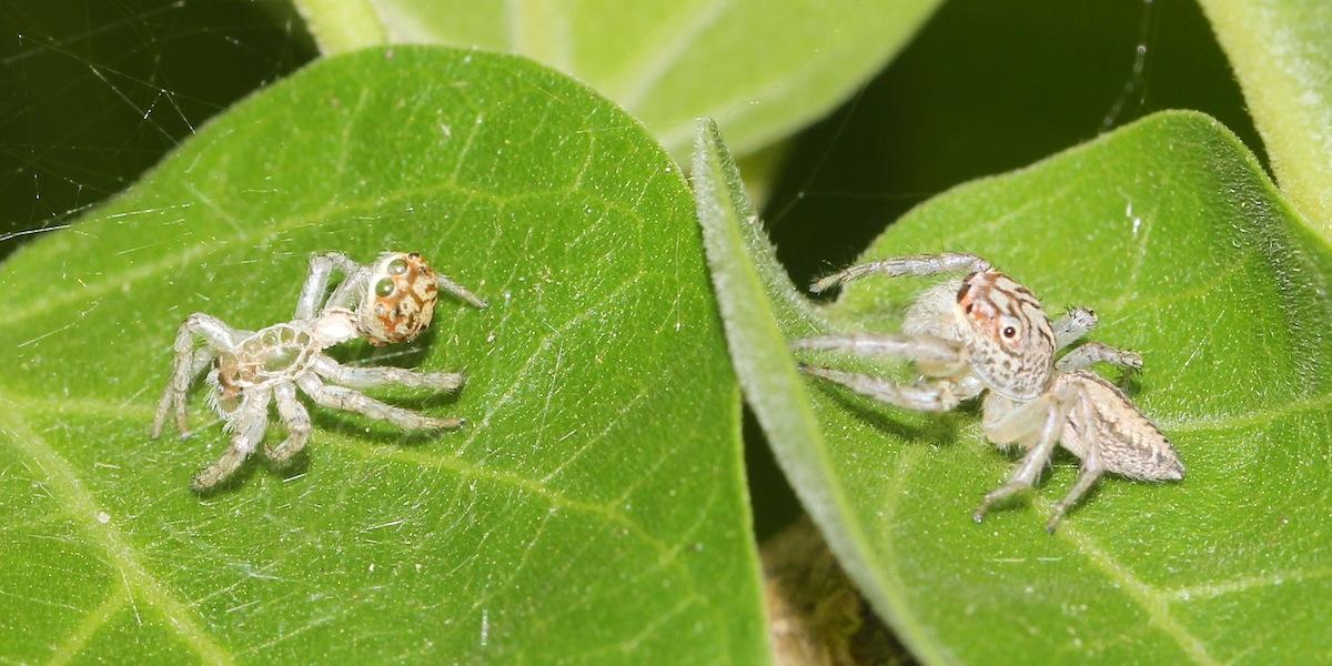 brownish spider on leaf