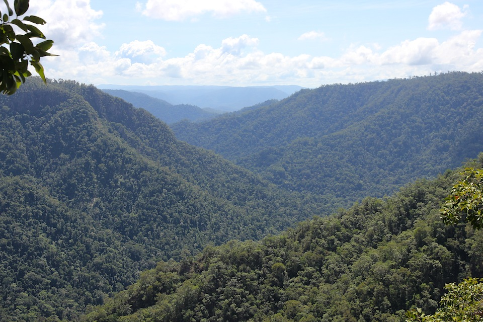 rainforested valley