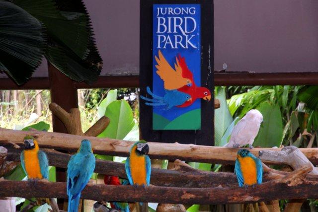 Park logo and parrots