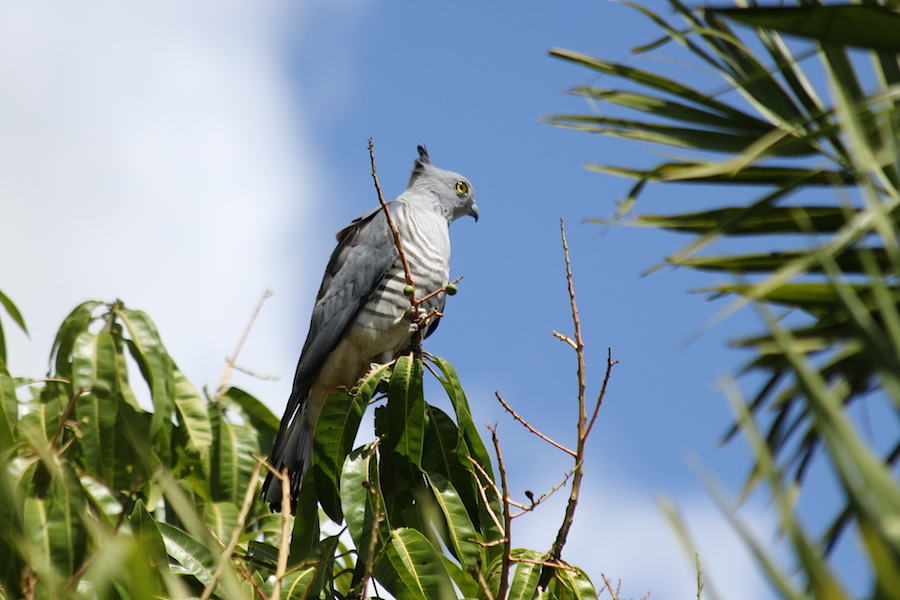 grey bird on twig