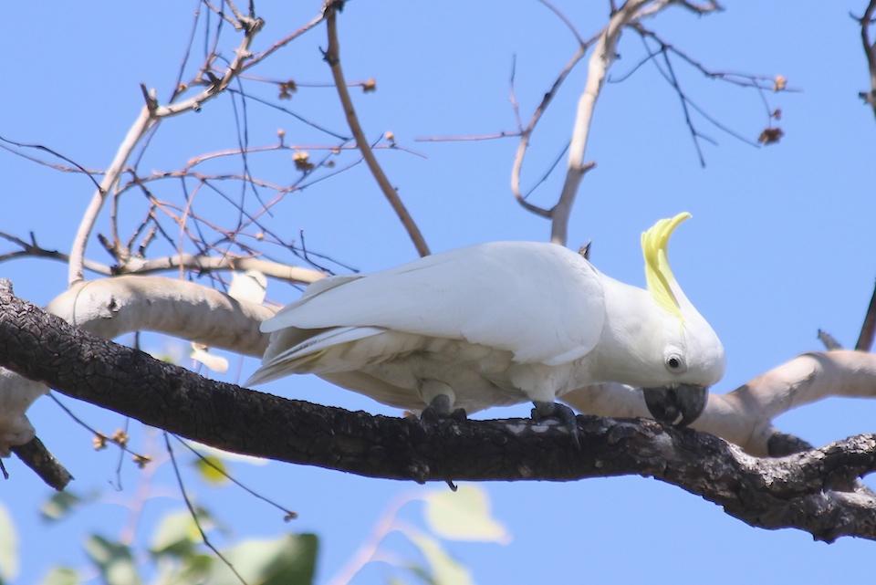 white bird on branch