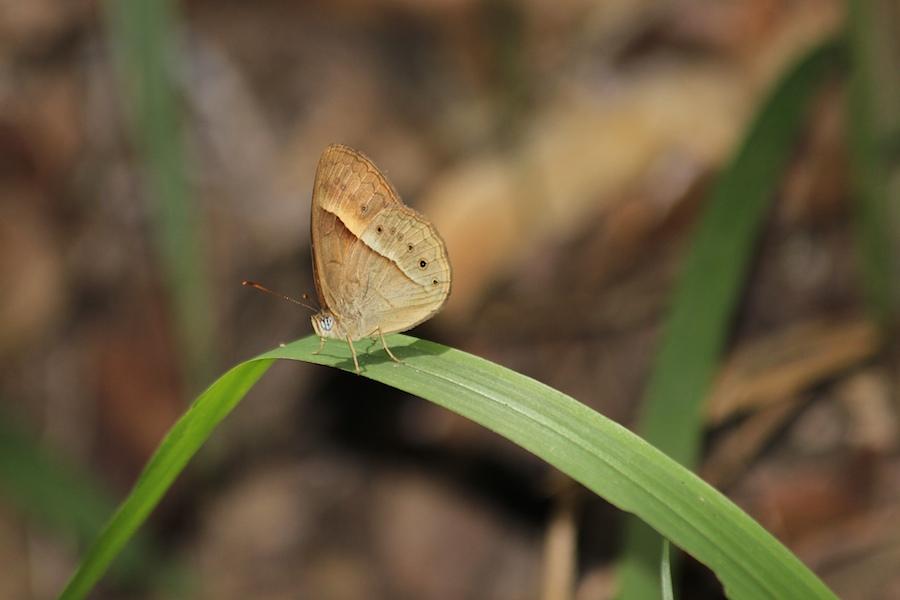 brown-orange butterfly