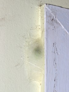 spider web on window frame