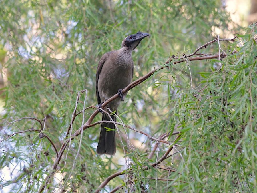 brown bird in tree