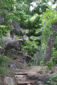 magnetic island walks