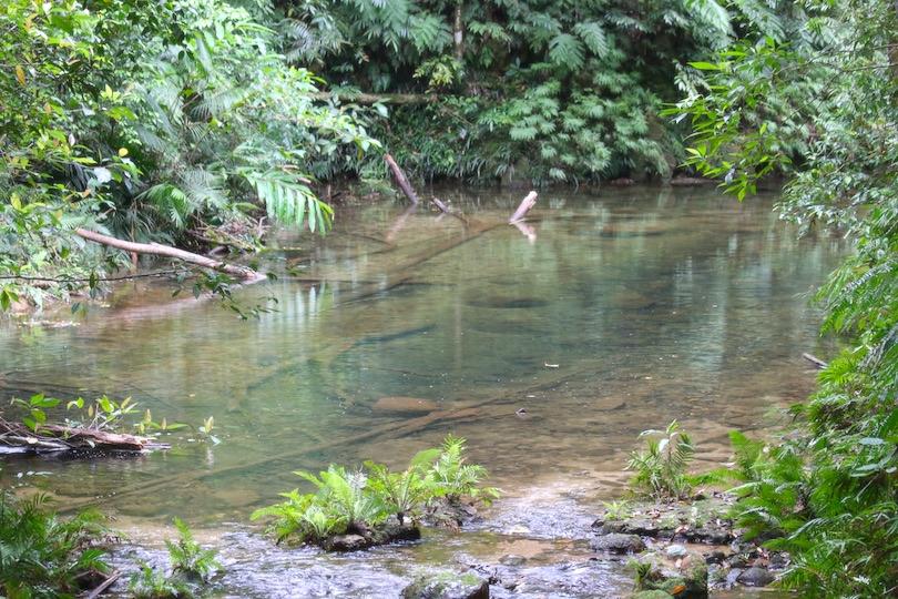 Birthday Creek