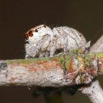 Porcupine Gorge spider