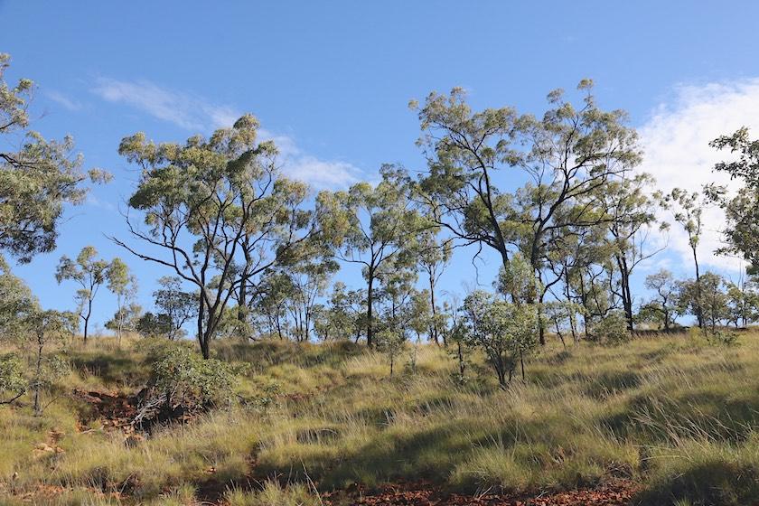 landscape near Porcupine Gorge Lookout