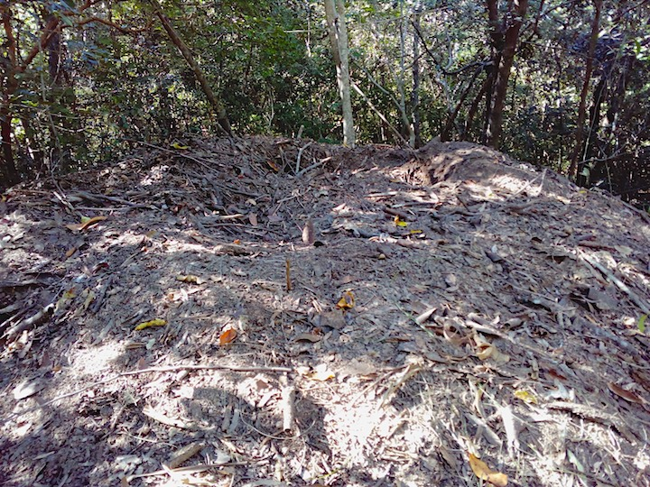 megapode mound - leaf litter and dirt