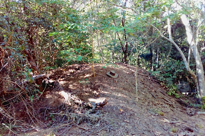 megapode mound of leaf litter and earth