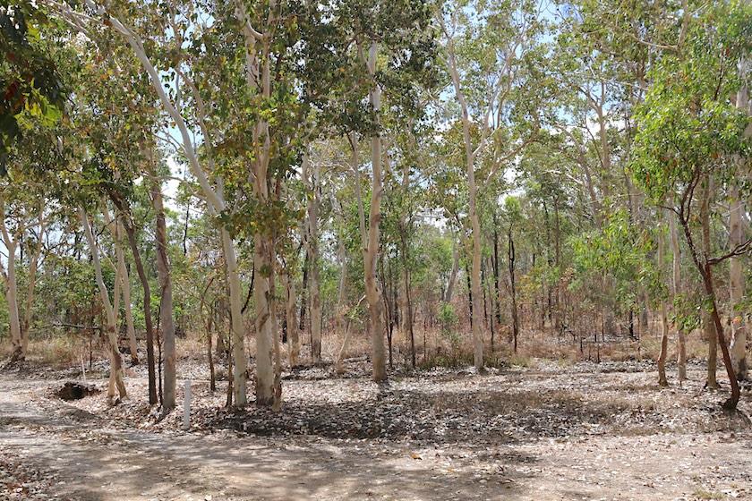 coastal eucalypt woodland