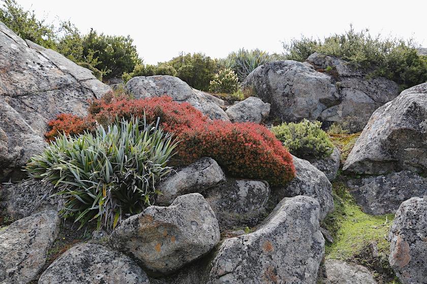 vegetation on top of kunanyi