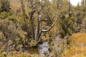 dove river view