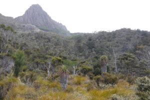 cradle mountain scene