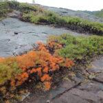 Porcupine bush