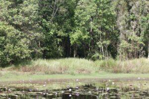 Tyto wetlands vegetation