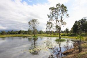 Tyto wetlands in 2009
