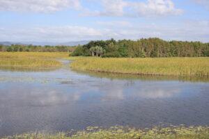Tyto wetlands