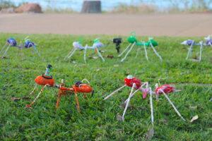 Strand Ephemera 2021 - debris ants