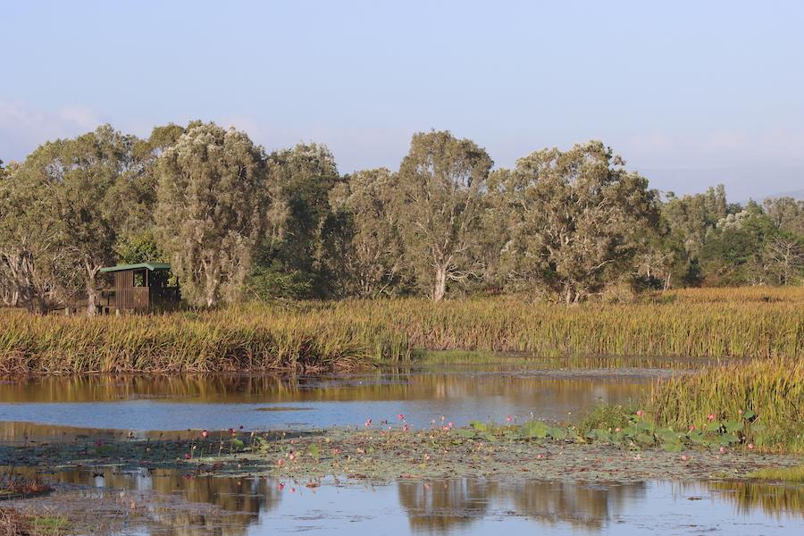 Tyto wetlands view